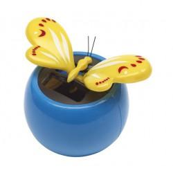 Sunny Butterfly : Papillon...